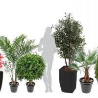 Lot de Plantes Vertes